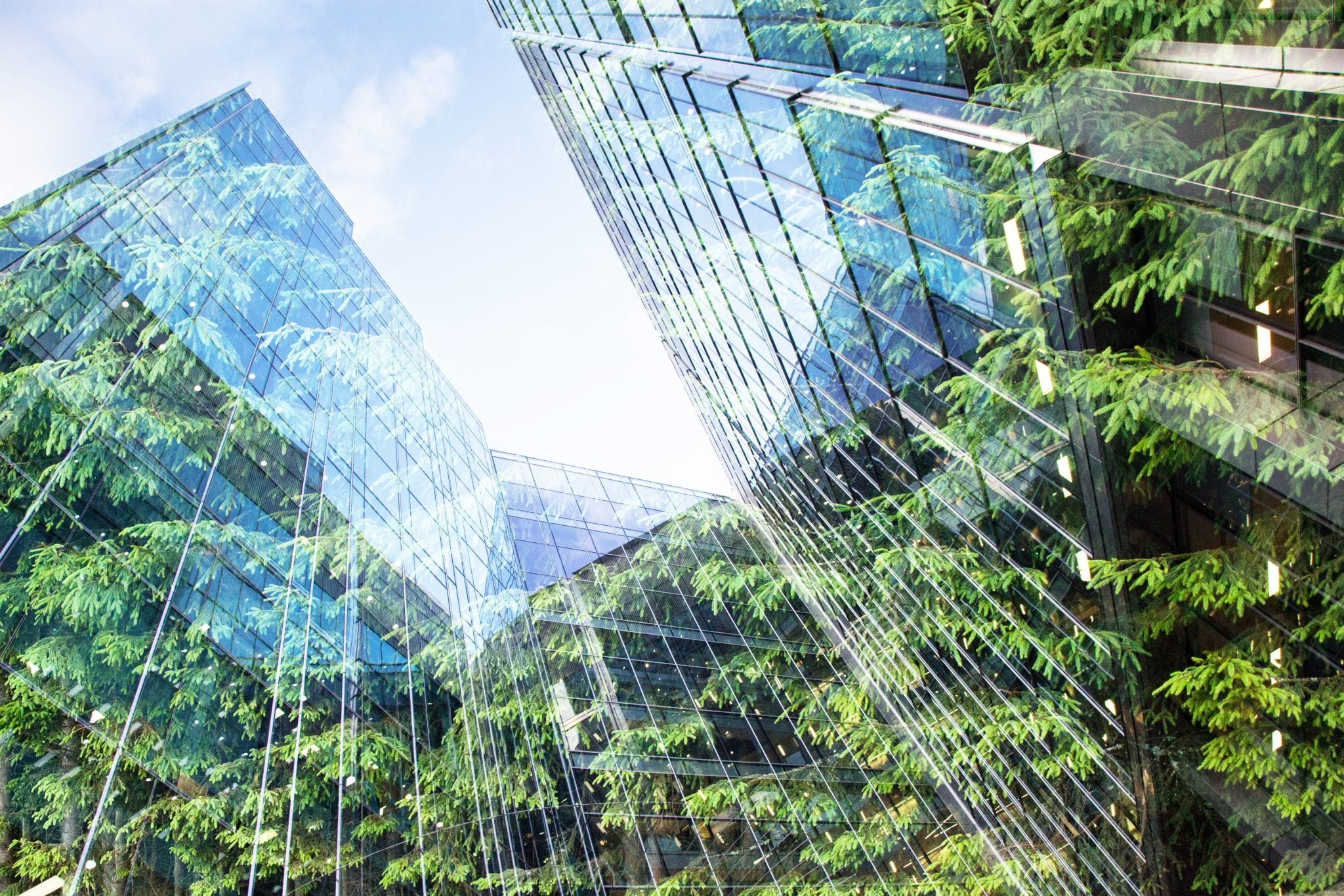 green city – double exposure of lush green forest and modern skyscrapers windows